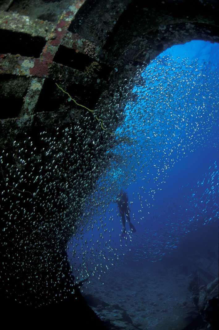 Glassfish dans épave